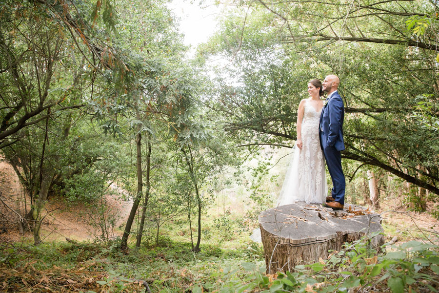 bride and groom look in the distance while standing on a stump in the woods